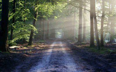 Sentir el cuerpo físico, quitarse la armadura, empezar el camino