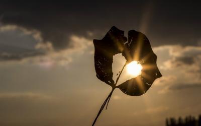 """""""Cuando hablas sólo repites lo que ya sabes, pero cuando escuchas quizás aprendas algo totalmente nuevo"""".      (Dalai Lama)"""